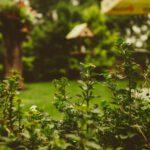 Waarom zou je een tuinontwerp laten maken?